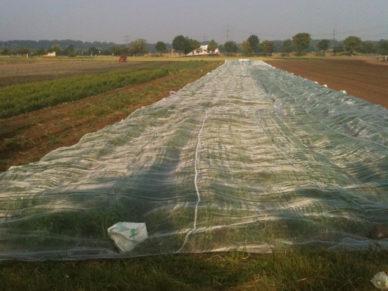 Gemüseschutznetz-Acker