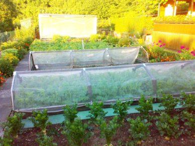 Gemüseschutznetz-Kleingarten